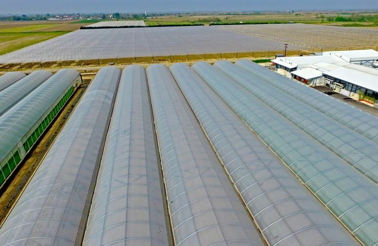 """Αγρόκτημα Βεζύρογλου – """"Πάνω από 100 στρέμματα θερμοκηπιακής καλλιέργειας"""""""